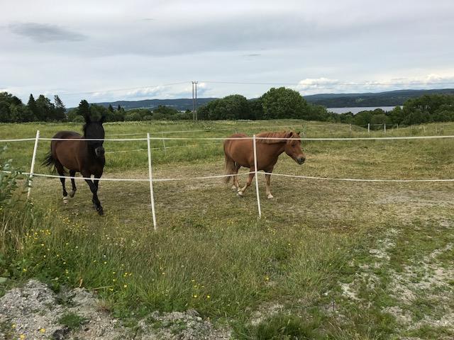 Kvikk ble møtt av to glade hester.
