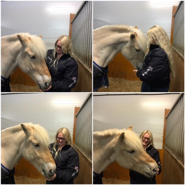 Hesteeier